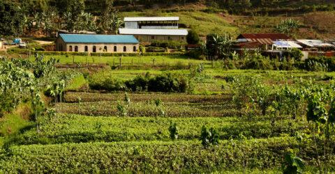 Afrique ferme cultures